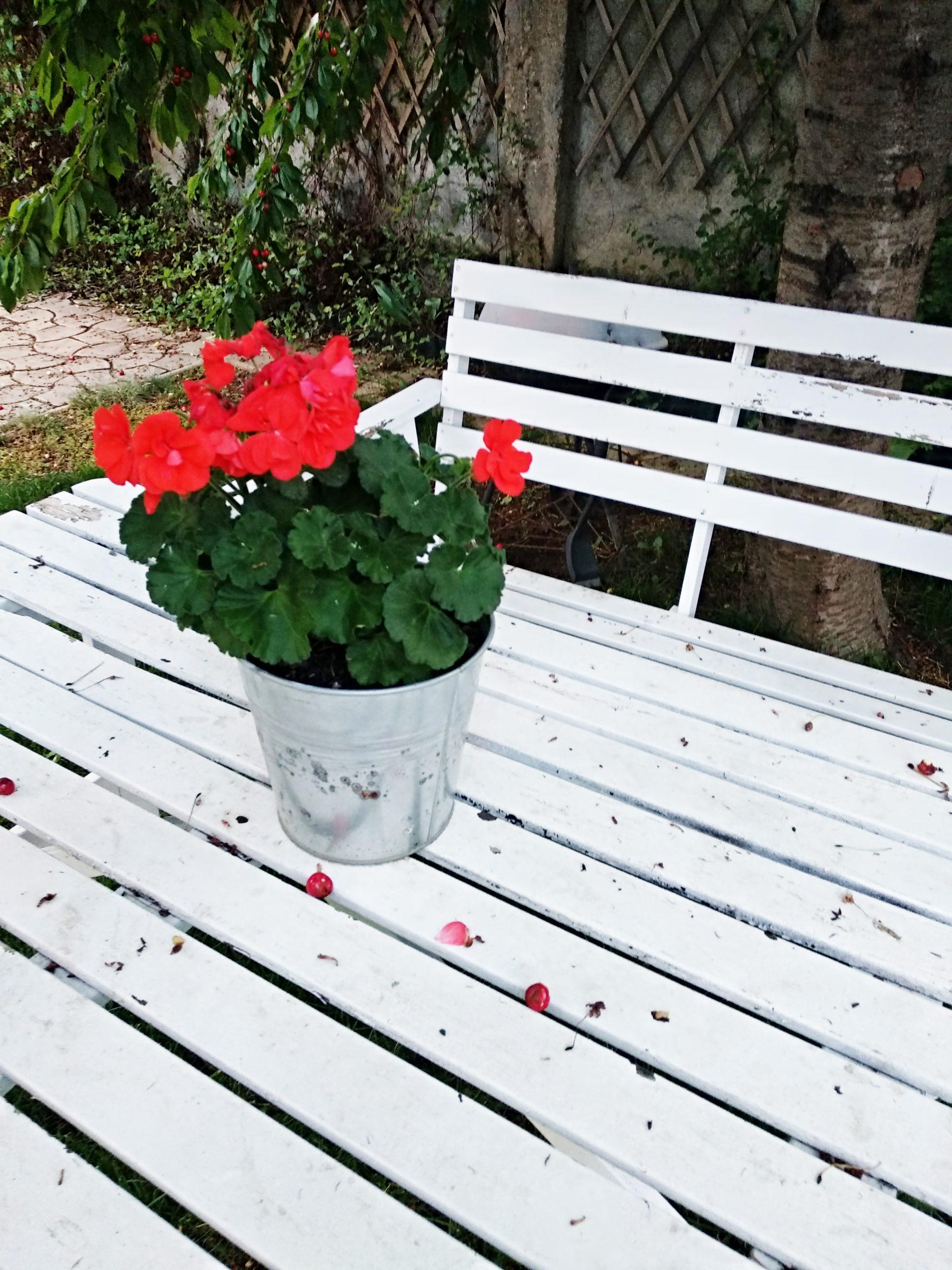 blog FUNKYFAIN | flori in luna mai